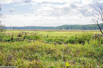 Mazowieckie łąki