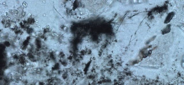 Oldest fossils of methane-cycling microbes expand frontiers of habitability on early Earth