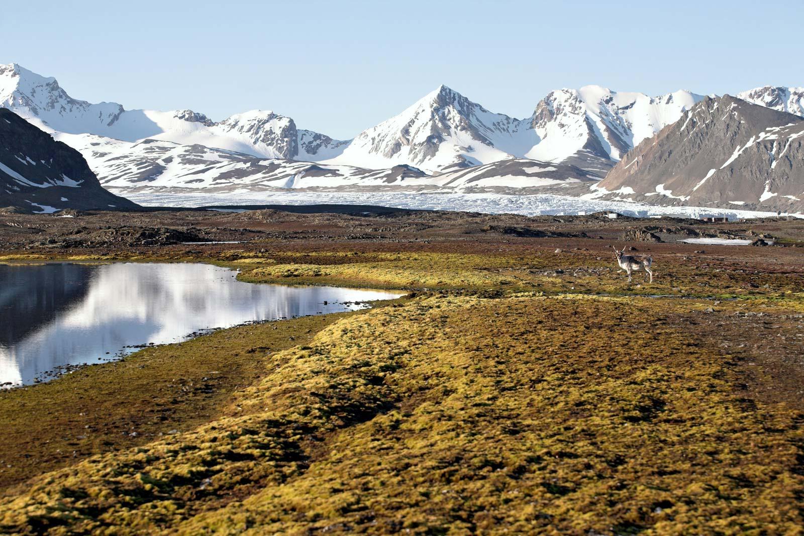 Растительность Островов Шпицбергена