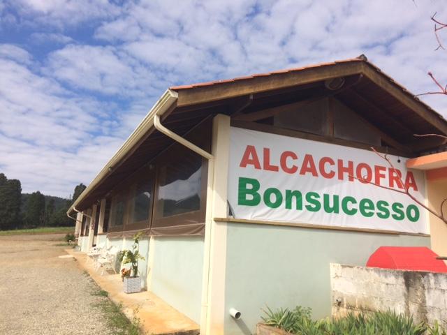 Alcachofra Bonsucesso