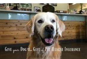 Pet медичне страхування-повинні мати для вашої собаки