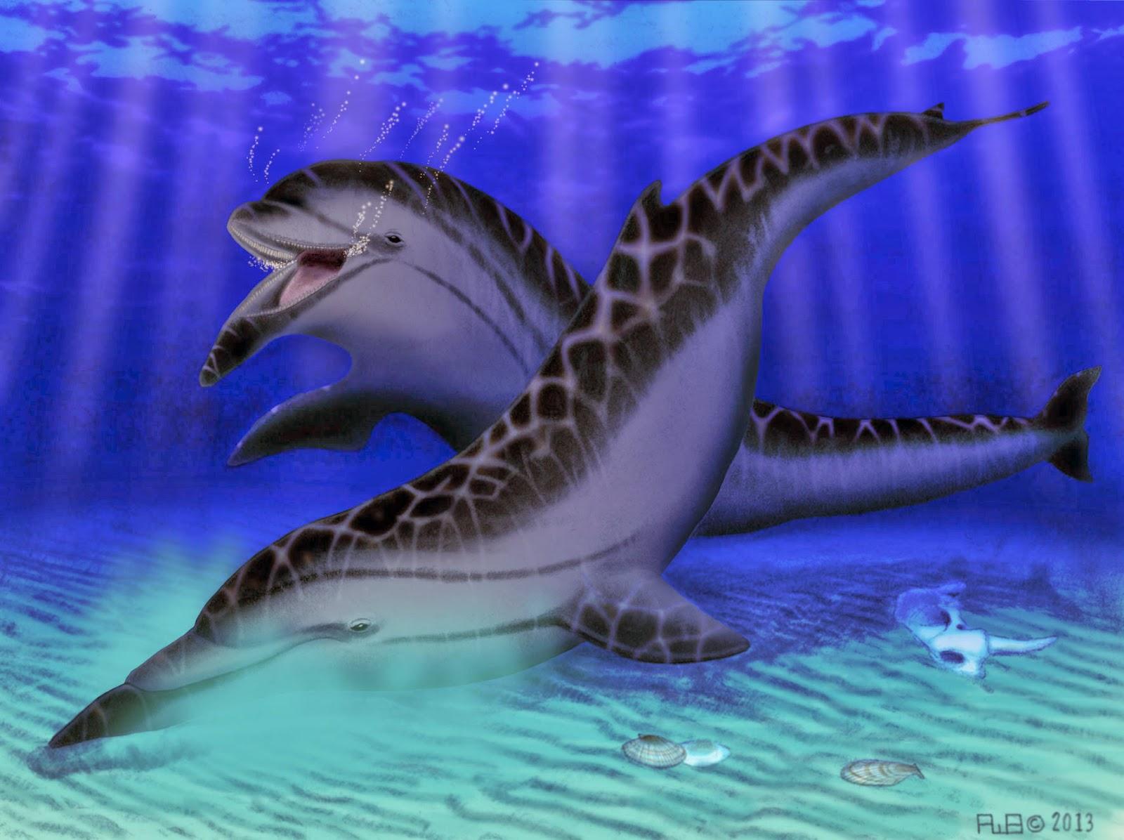 Extinct California porpoise had a unique underbite - The ...