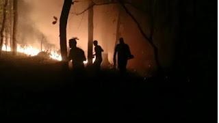 दुधवा टाइगर रिजर्व में लगी आग, 100 हेक्टेयर जंगल जलकर राख