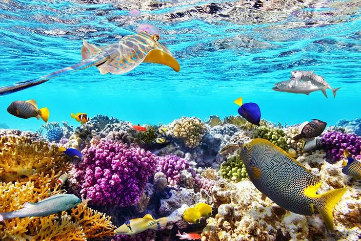 Ekosistem Pantai Dan Laut Mangrove Terumbu Karang Rumput Laut Dan