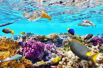 Ekosistem Pantai dan Laut; Mangrove, Terumbu Karang, Rumput Laut dan Padang Lamun
