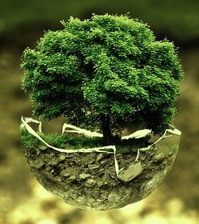 Positiewe impak op ekosisteem
