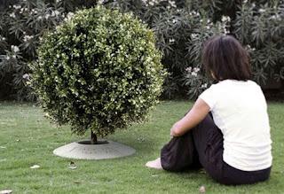 Al morir, convierte tus cenizas en un árbol seres queridos