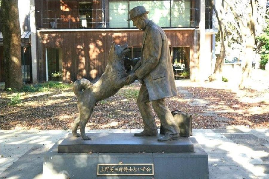 Hachiko, Dog, Statue