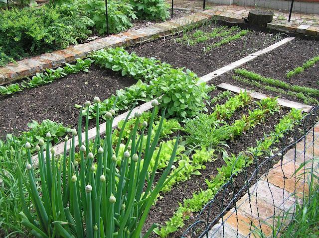 wiosna w warzywniku
