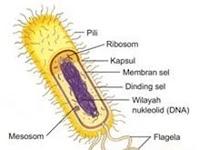 Tahukah anda Apa itu sel prokariotik?_Biologi Kelas XI IPA
