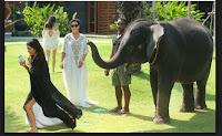 Kim Kardashian siendo Atacada por un Elefante