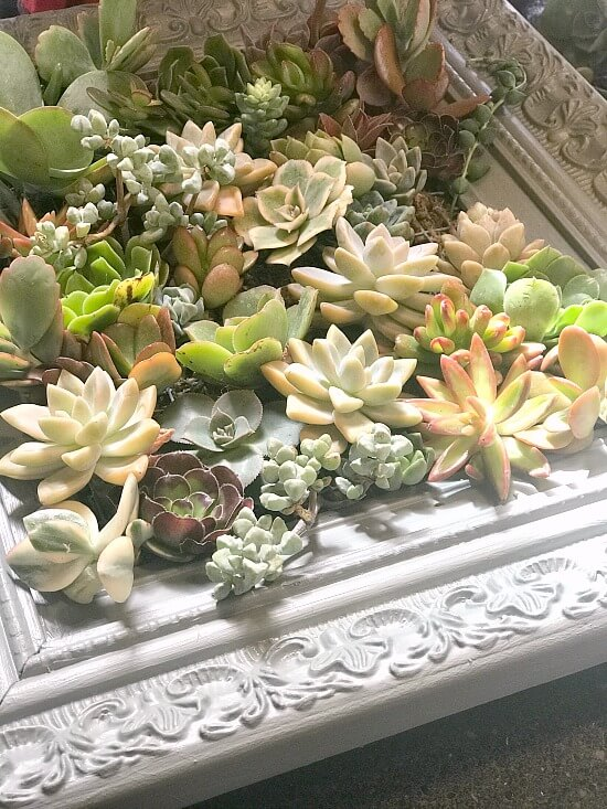 How to build a frame for succulents
