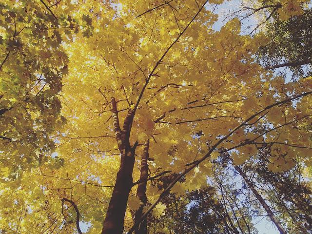 Leśne wędrówki jesienią