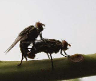 Obat Penghilang Tahi Lalat