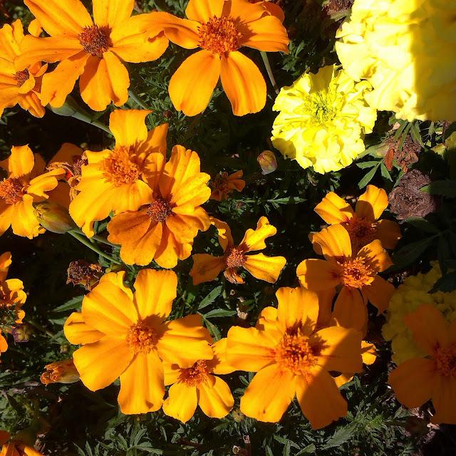 jesienny pomysł na obiad bloger papryka kwiat jesień october