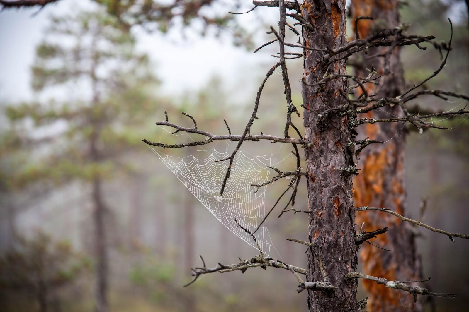 hämähäkineverkko