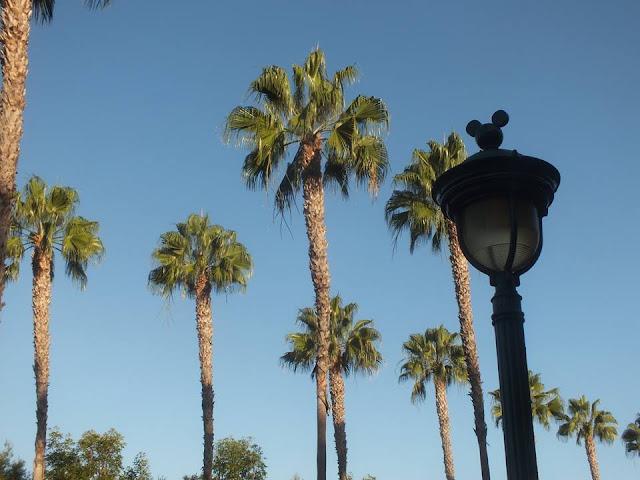 דיסני קליפורניה - פנסי רחוב בצורת מיקי מאוס