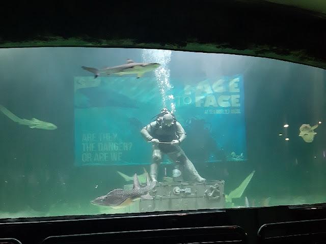 Live Feeding Shark