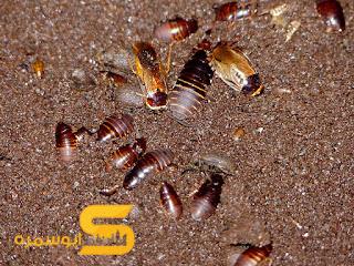كيف اقضي على النمل في المنزل