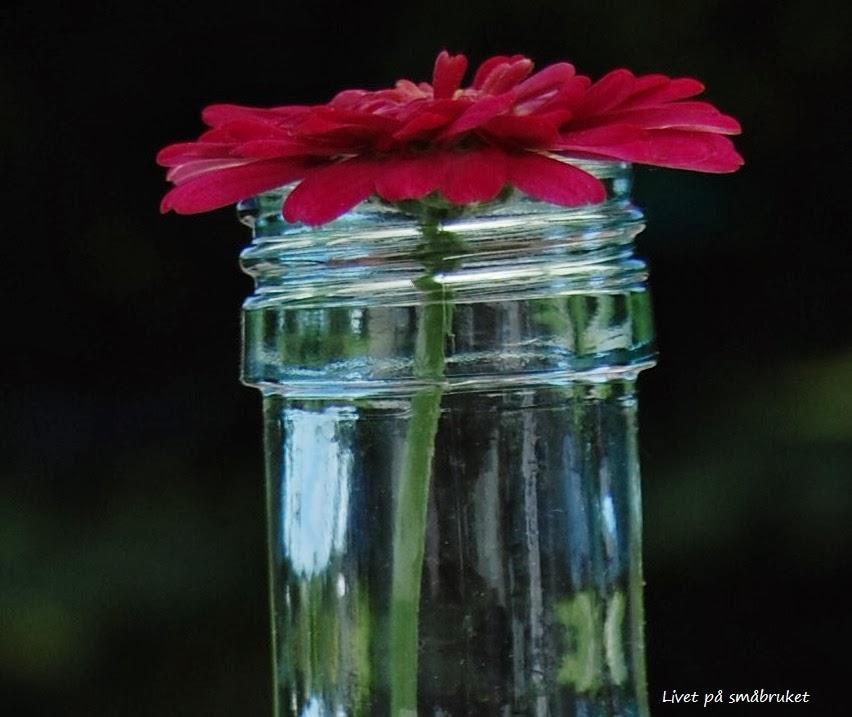 bruke armeringsmatter til planter