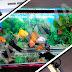 Review Lampu UV TAKARI Versi 5 Watt Kecil: Cocok untuk Aquarium Ikan Mas Koki 60 cm
