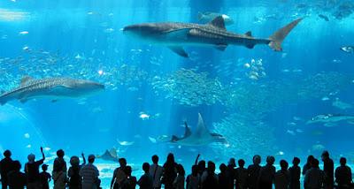 aquário de balneário camboriú