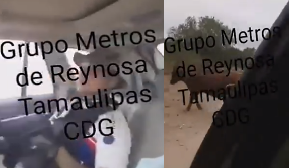 """VIDEO; Sicarios de """"El Metro 21"""" Cártel del Golfo en las brechas de Reynosa en operativo a toda velocicad , hasta las vacas andan atropellando"""