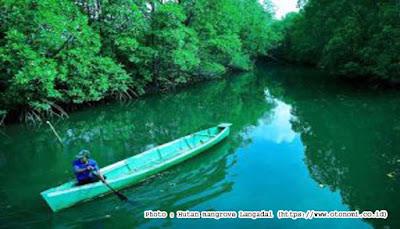 Indocement Bangun Kampung Mangrove di Kotabaru