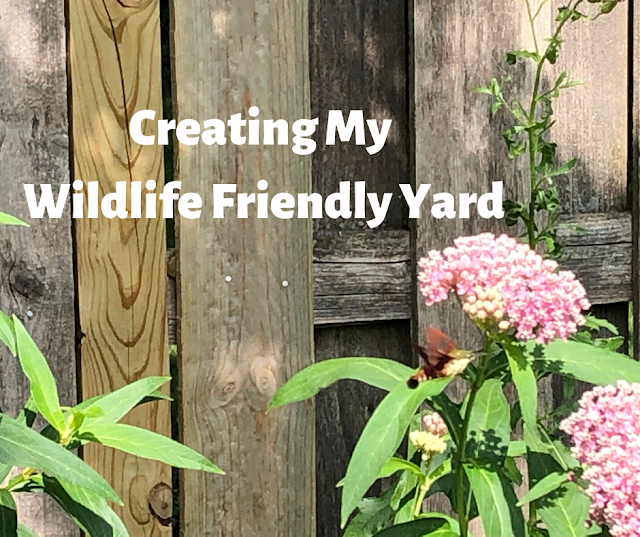 Creating a Wildlife Friendly Garden to attract butterflies and birds