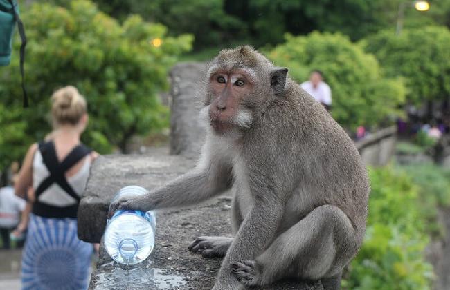 10 Gambar Wisata Pura Uluwatu Bali