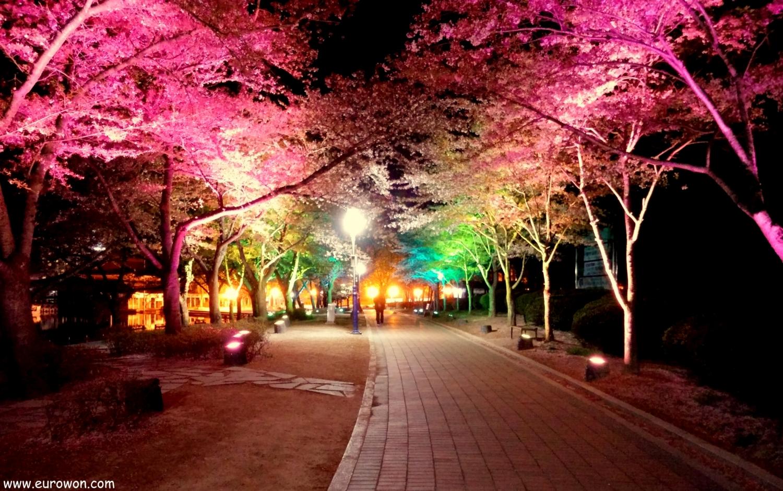 Cerezos en flor iluminados de noche con distintos colores