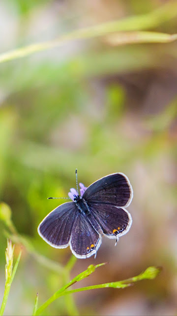 Garden, butterfly, grass, focus, macro