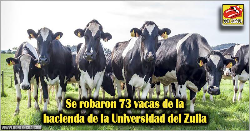 Se robaron 73 vacas de la hacienda de la Universidad del Zulia