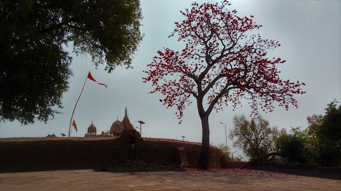 Sacred Tree at Khandwa
