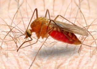 Penyebab dan Cara Mencegah Malaria
