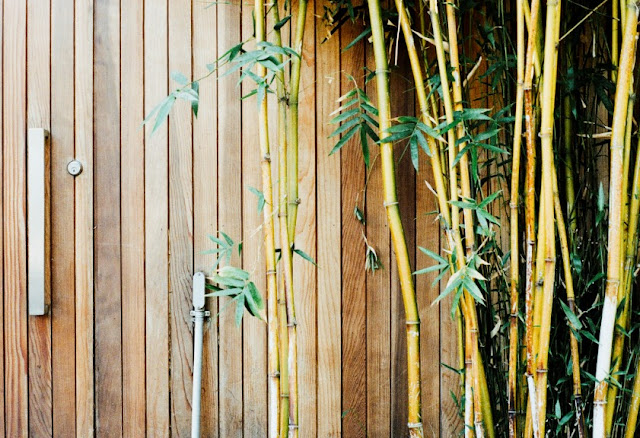 How to grow small bamboo Plant in room