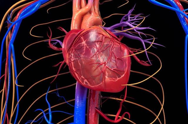 Penyebab Gangguan pada Organ Peredaran Darah Manusia