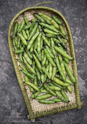 fava beans or bakla : a bean rich in L-dopa | recipe of bakla ki subzi