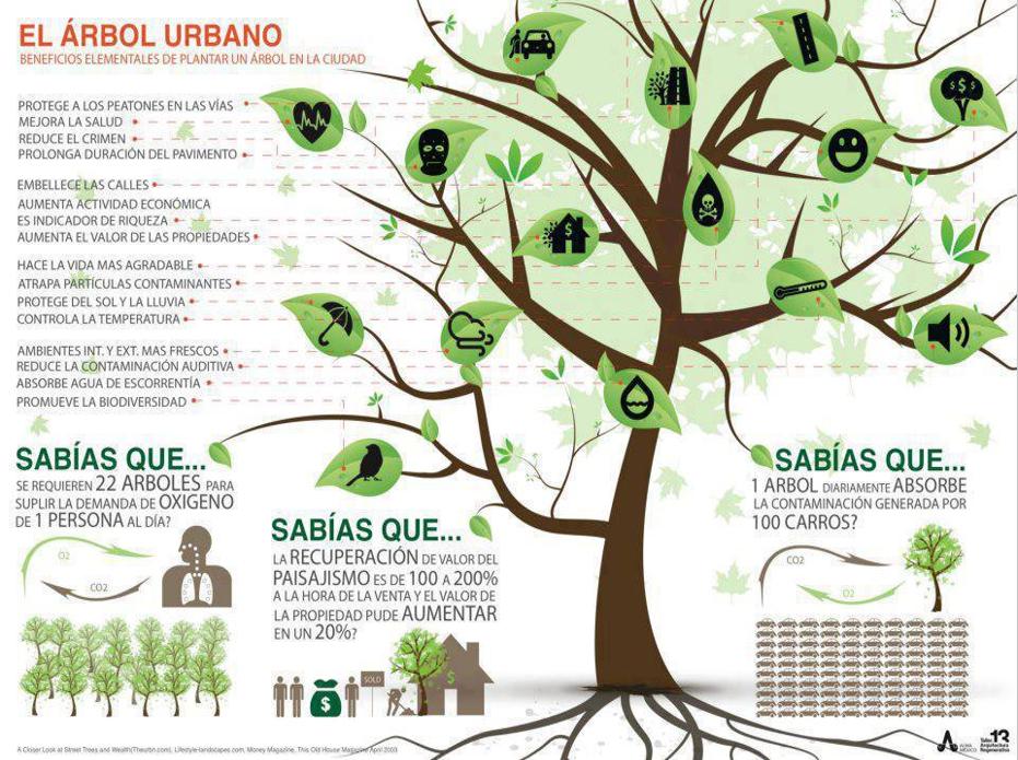 Historias en verde los arboles de la ciudad la dignidad for Cuanto miden los arboles
