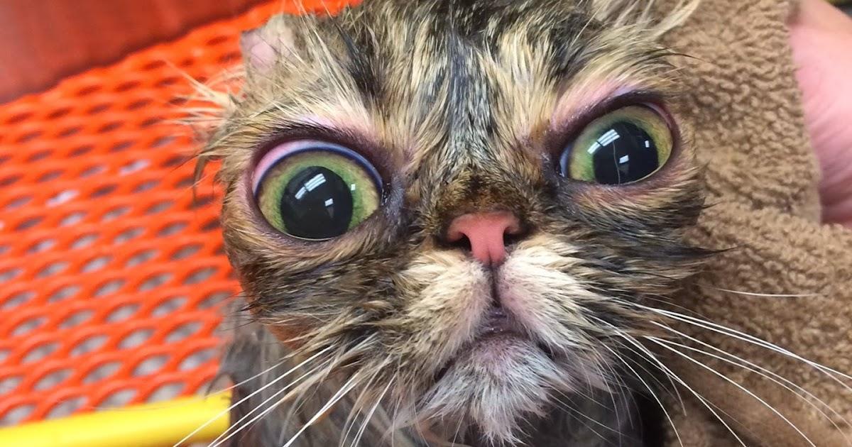 6842cc5c4e A Wet and Grumpy Cat