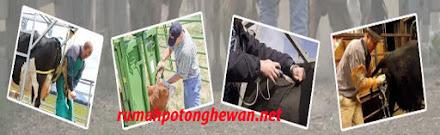 Alat Pelumpuh Hewan Sementara