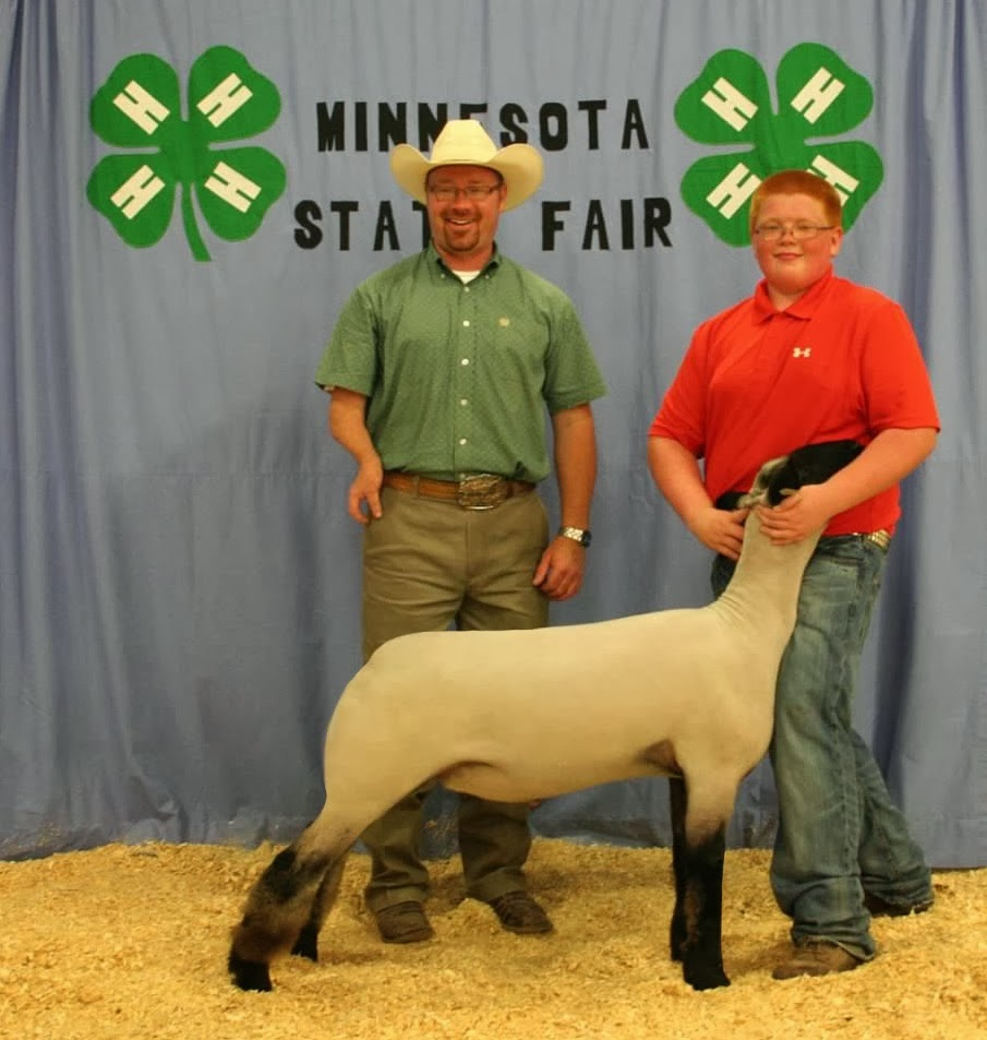 Grand Champion Market Lamb 2013 Minnesota State Fair 4-H