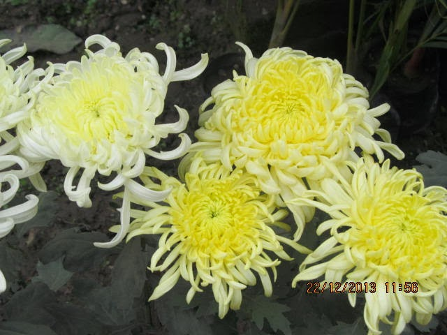 magic flower in blooming - photo #24