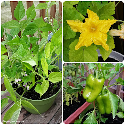 Container Gardening with Pets