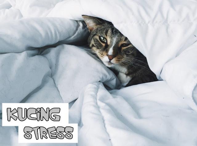 Ciri Induk Kucing Stress