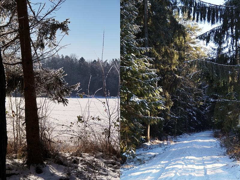 Wald und Natur im sonnigen Winter bei Schnee | Tasteboykott