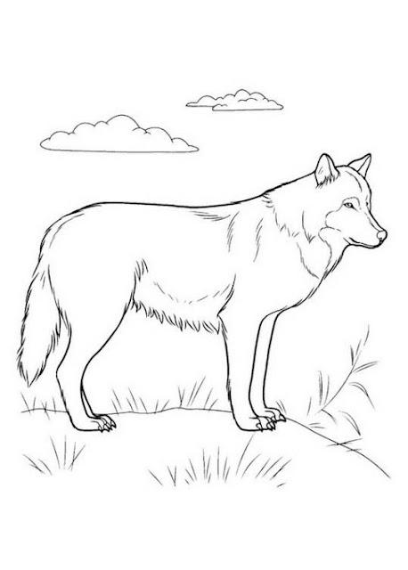 Hình tập tô màu con sói đẹp