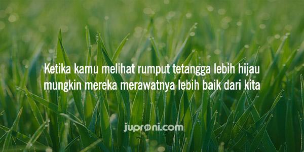 quotes kata kata bijak rumput tetangga lebih hijau daripada