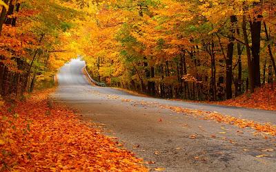 http://wallpaperfolder.com/wallpapers/autumn+leaves+falling