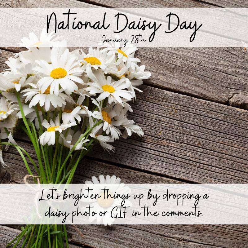 National Daisy Day Wishes Awesome Images, Pictures, Photos, Wallpapers